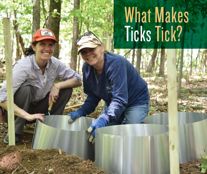 What Makes Ticks Tick?