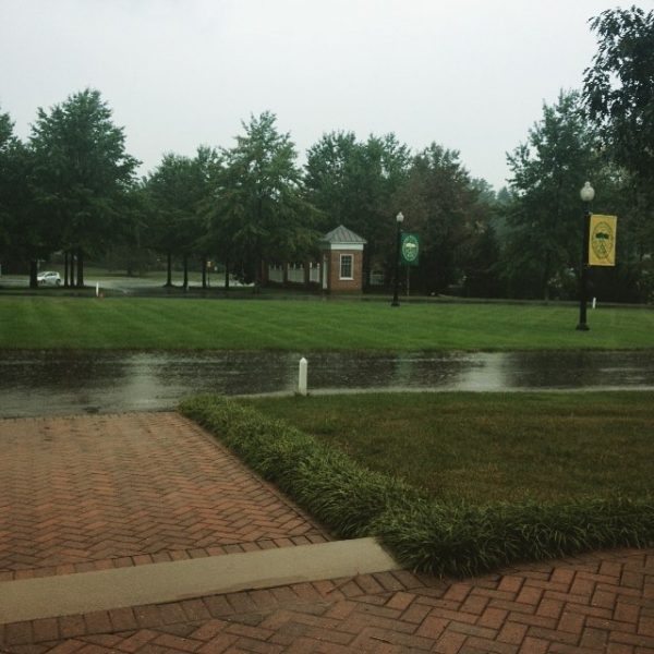 The view from the window of the #hollinsalumnaeassociation ... It's raining! Our grass is very, very, happy! #myhollins  #mondayfunday