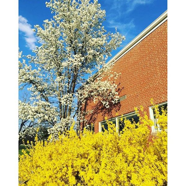 Beautiful spring colors around campus #myhollins #roanokeva #springtime