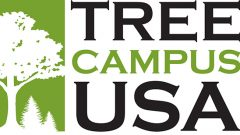 Arbor Day Foundation Honors Hollins with 2017 Tree Campus USA® Recognition