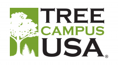 Hollins Earns Tree Campus USA® Recognition for Third Consecutive Year
