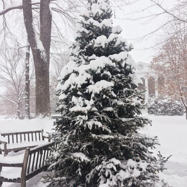 Photo of snowy tree on Front Quad