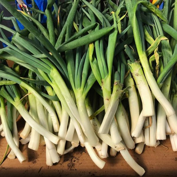 Photo of leeks from the community garden