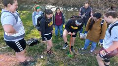 Hollins Honors Earth Day, Arbor Day with Free Tree Seedlings