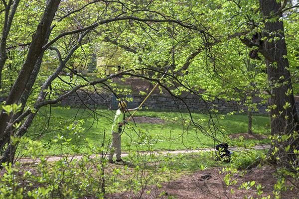 Bartlett Tree Work in Beale Garden