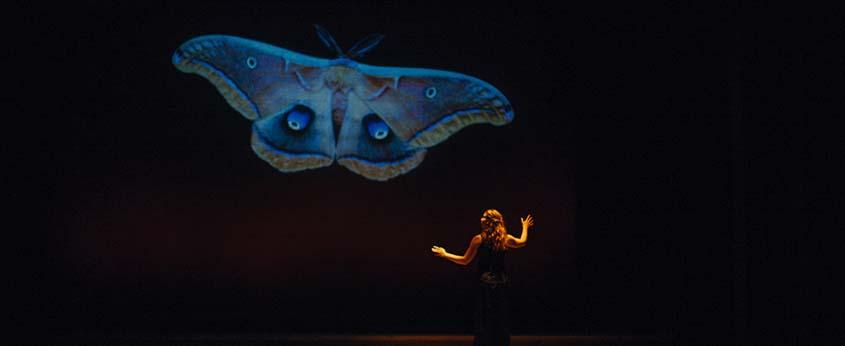 Pilgrim Moth